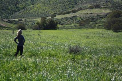 IMG_0960 In a Field